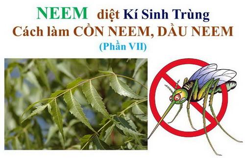 Công dụng của cây Neem