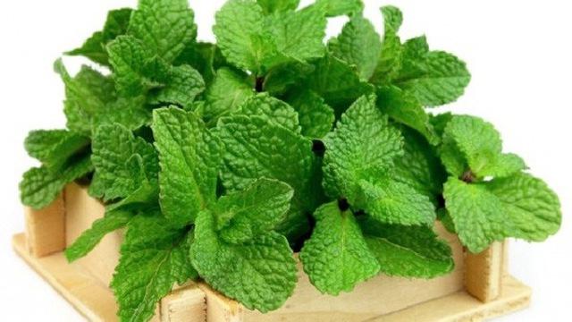 5 loại thực vật tốt cho phổi đang xuất hiện hằng ngày trong bếp nhà bạn