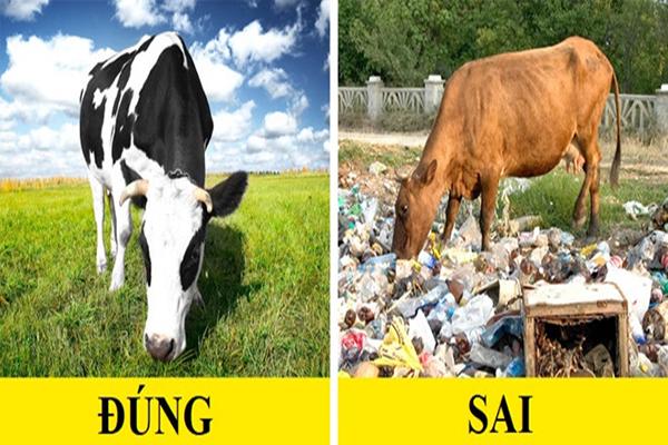 Hiểu rõ nguồn gốc của thịt: Cố gắng tìm hiểu con vật này đã được ăn những gì. Bạn có thể kiểm tra trên bao bì hoặc hỏi người bán thịt. Nhiều chuyên gia đồng ý rằng những con bò ăn cỏ xanh có hương vị thịt tốt nhất, lượng chất béo cũng lành mạnh hơn.