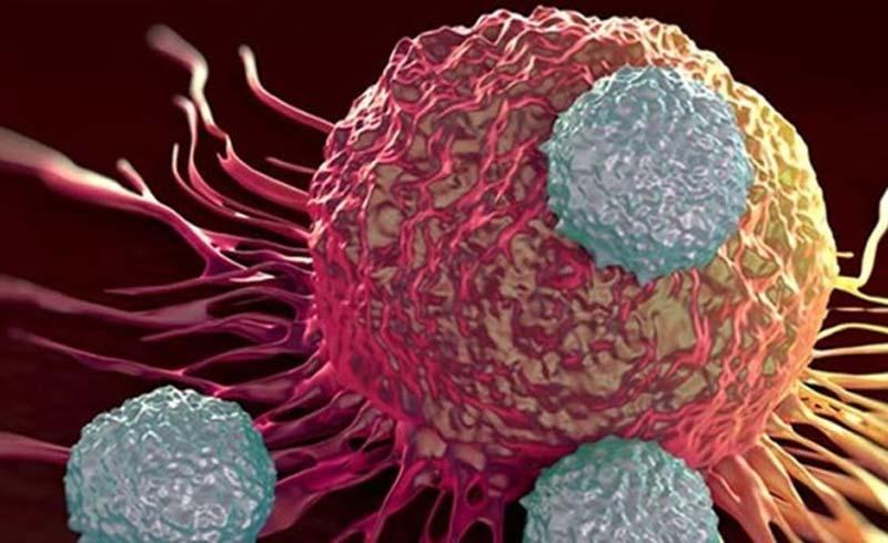 """Tìm thấy hoạt chất khiến tế bào ung thư """"tự sát"""" trong 30 phút"""