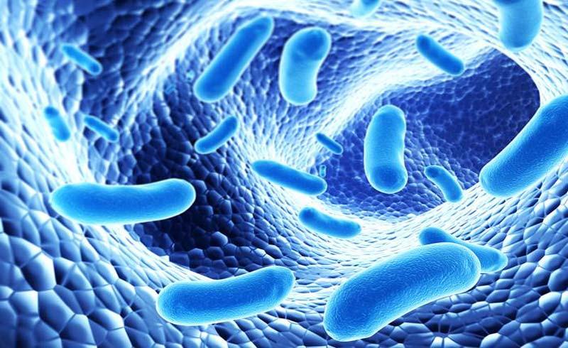 Việt Nam làm chủ công nghệ sản xuất bào tử lợi khuẩn dạng nước – đa chủng – nồng độ cao