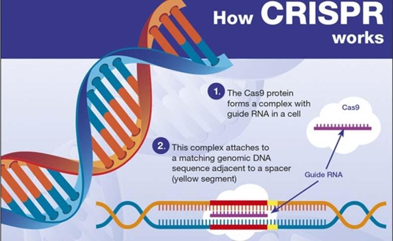 Những đột biến gene có thể tạo ra siêu nhân