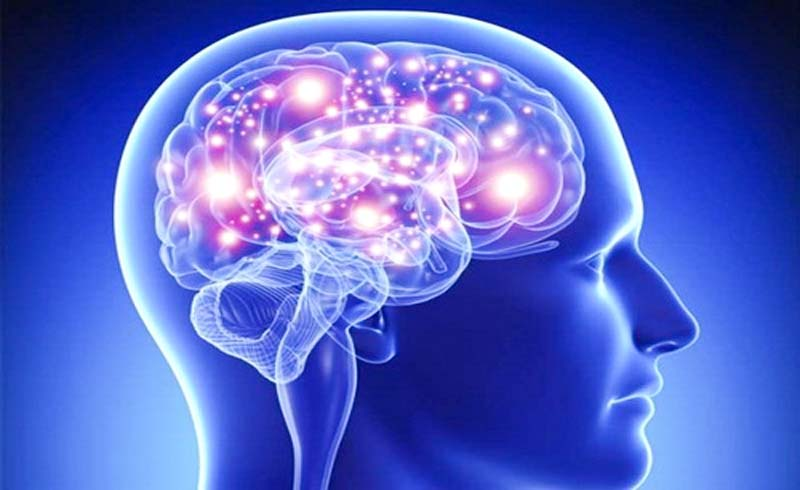 Những khám phá mới về não bộ