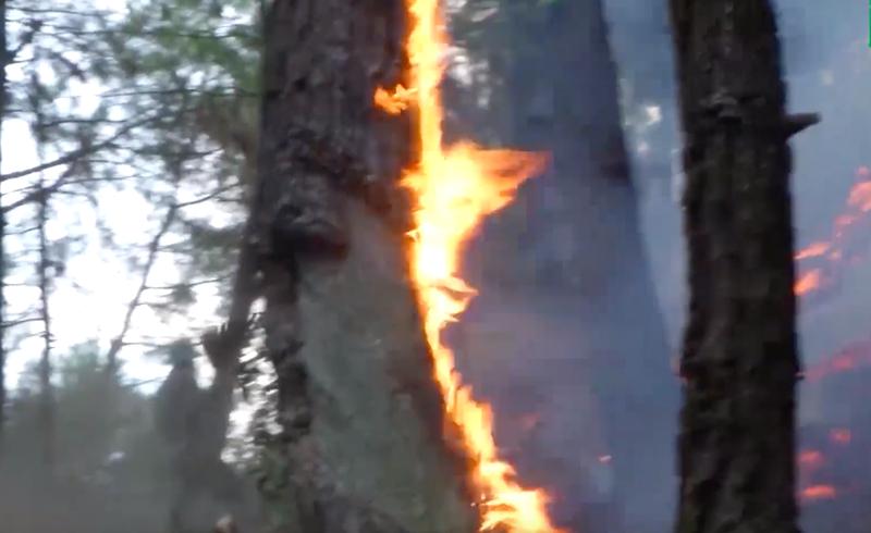 Hai người tử vong do cứu hạn và chữa cháy rừng ở Nghệ An