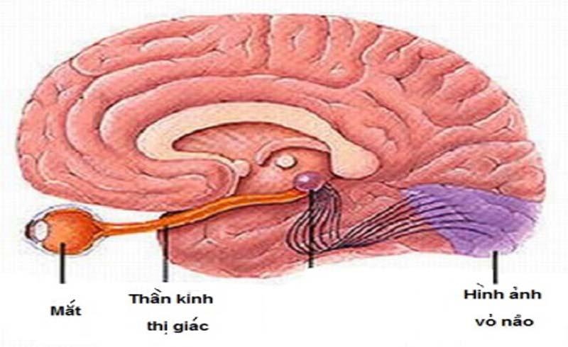 Thuốc trị rối loạn thần kinh thị giác