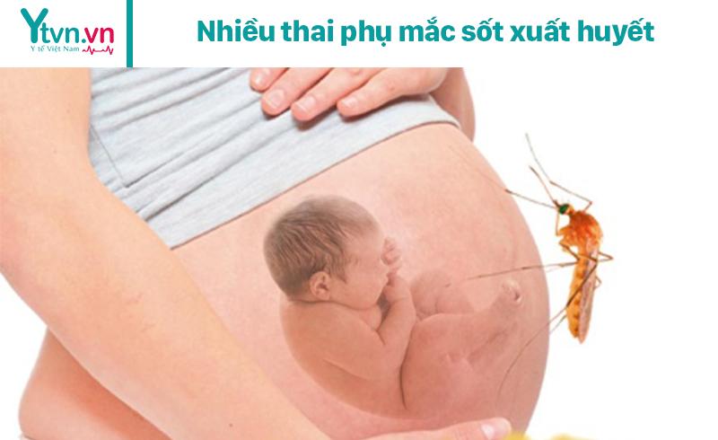 Nhiều thai phụ mắc sốt xuất huyết