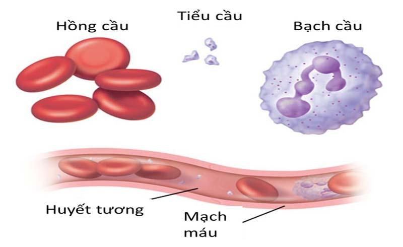 Thiếu máu và những hệ lụy khó lường